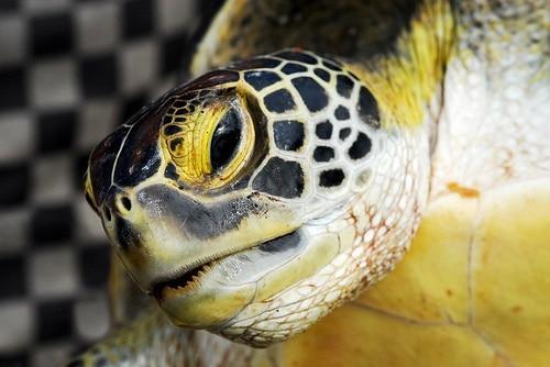 Turtle trading: cos'è, caratteristiche e vantaggi