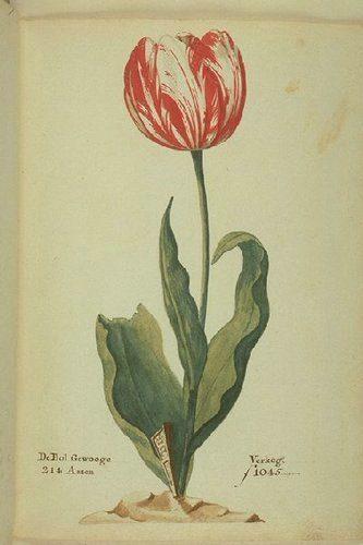 bolla dei tulipani - crisi finanziarie