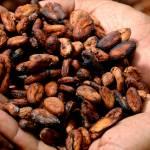 Trading Cacao: Come si Fa a Investire sulla Quotazione in Tempo Reale?